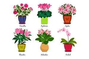 Houseplant flowers in pots