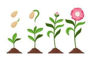 Pink flower growth process icons