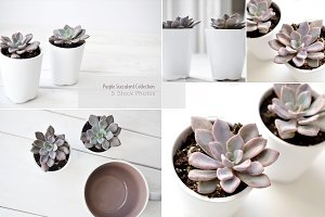 Purple Succulents & Neutrals