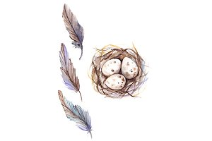 Watercolor bird feather quail nest egg set isolated
