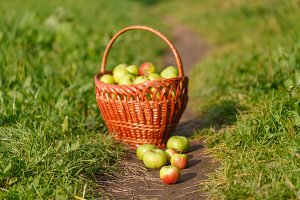 green ripe apples in a wicker basket