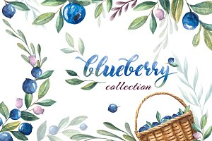 blueberry watercolor collection