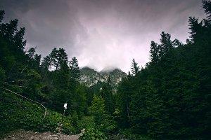 Dark forest in mountains.