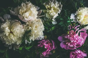 White and pink peony flowers