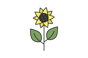 Sunflower color icon