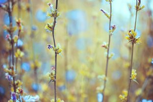 vintage autumn flowers photo with cold unusual colors