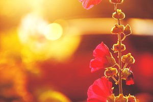 autumn red vintage flowers an natural sunny background