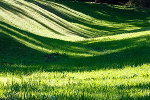 Green grass lawn with shadows.