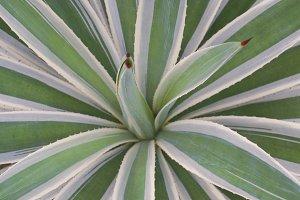 Plant Symmetry