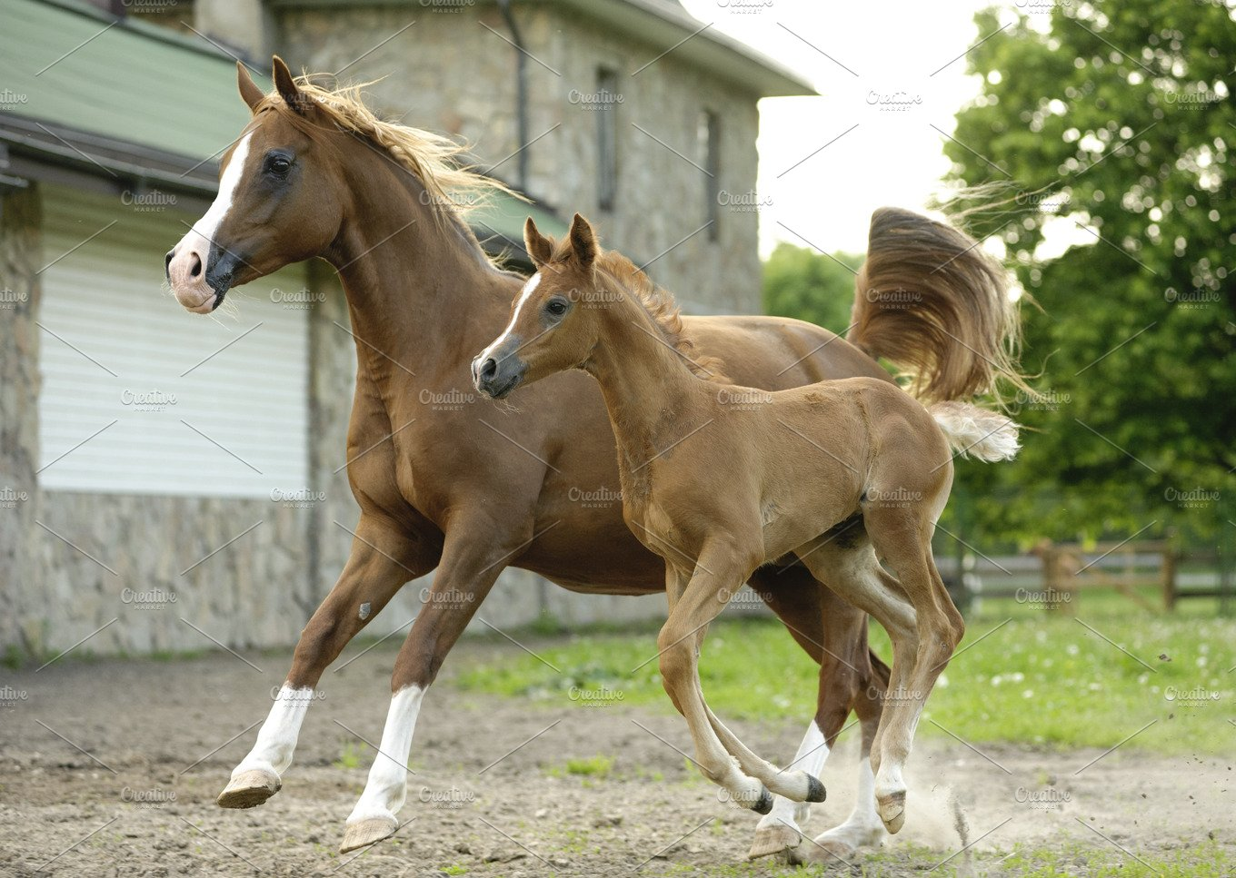 Arabian horse mare and foal running animal photos creative market - Arabian horse pictures ...