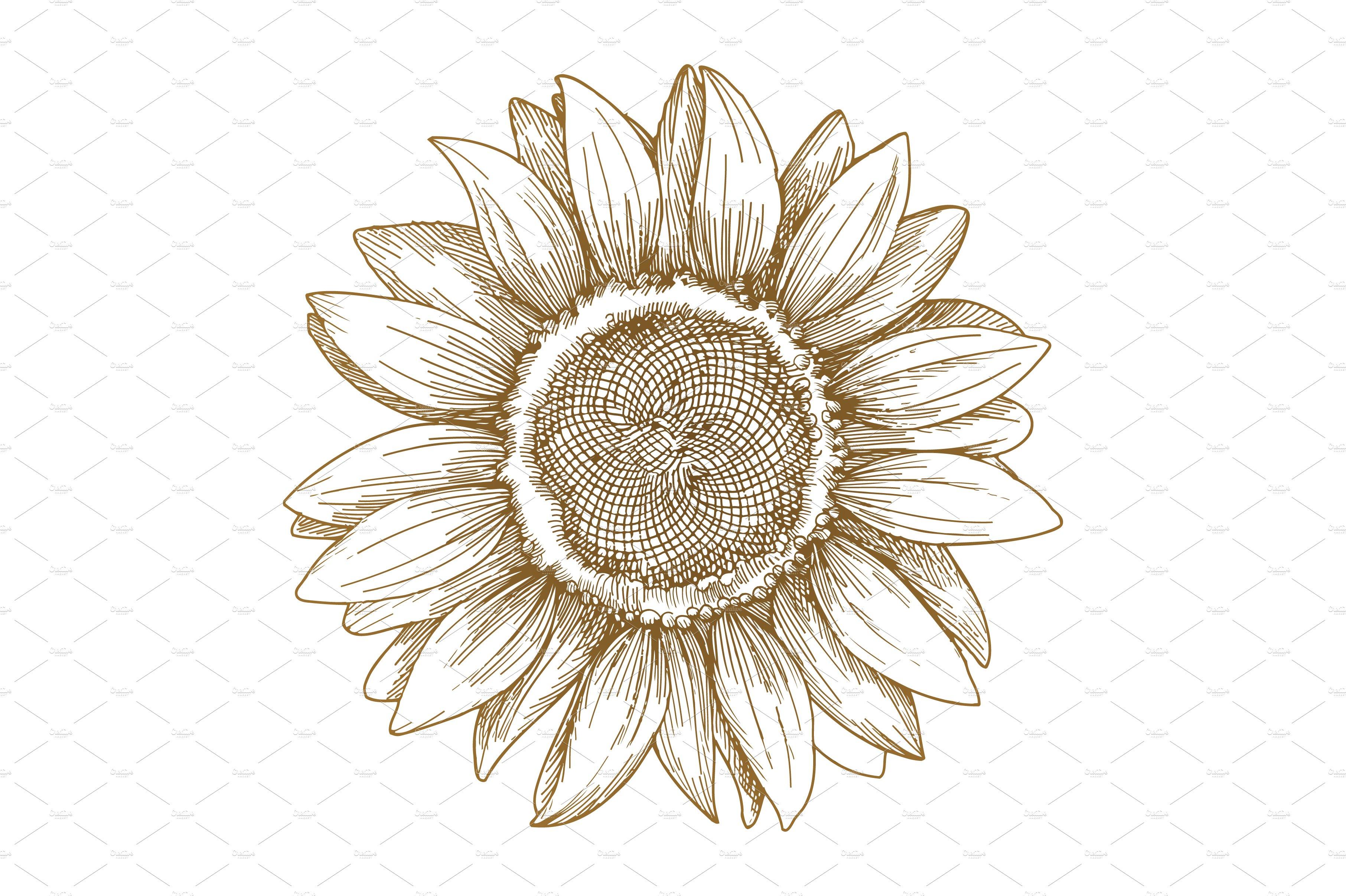 Sunflower sketch, vector ~ Illustrations ~ Creative Market