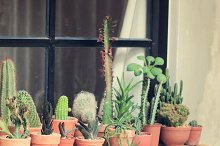 Various of cactus for decorated