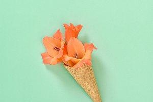 Gladiolus flower in waffle cone