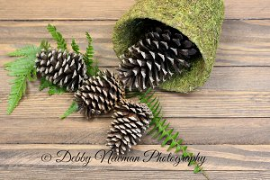 Pinecones and fern on dark wood