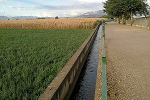 Ditch for irrigation and fields