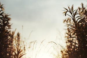 sun grass and sky natural vintage sunset background