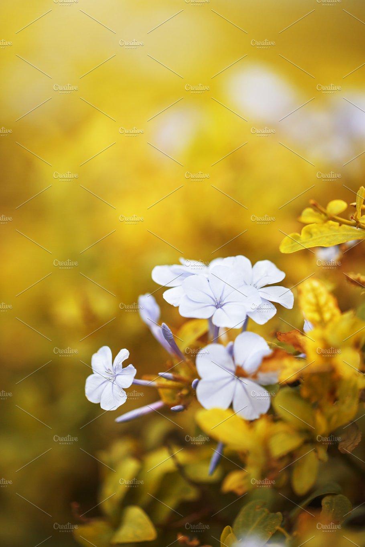 Vintage Photo Of Big Blue Soft Flowers In Orange Autumn Leaves In
