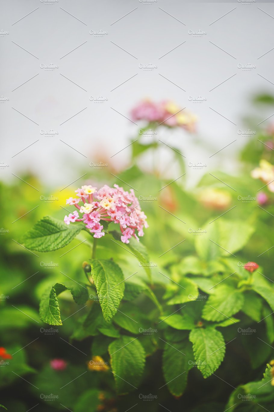 Pink Flowers On Green Grass Background Outdoor Autumn Photo