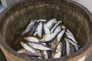 Herring in a wooden barrel - sea fish