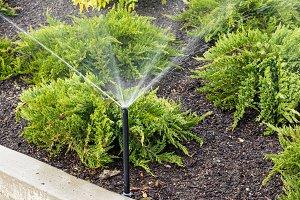 Irrigation sprinkler in flower bed