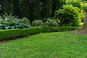 Grassy lawn with hedges