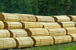 Fence posts stacked at lumber mill