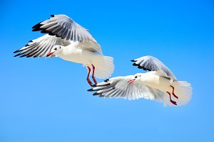 Two white sea gulls