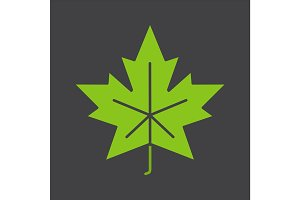 Maple leaf glyph color icon