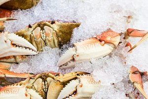 Dungeness crab on ice
