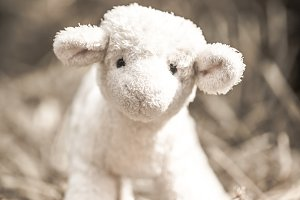 little sheep toy