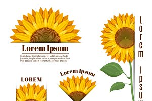Sunflower banners