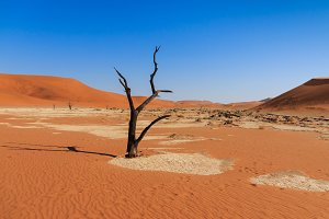 Dead tree deadvlei valley Namibia