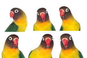 Sequence with portraits of a parrot