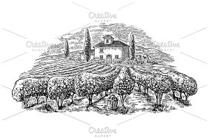 Vineyard, villa, rural landscape