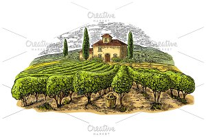 Rural landscape with villa, vineyard
