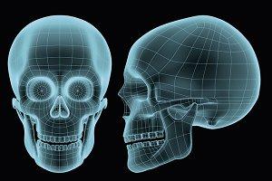 human skull wireframe hologram