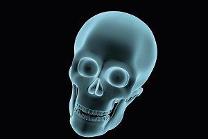 human skull halloween