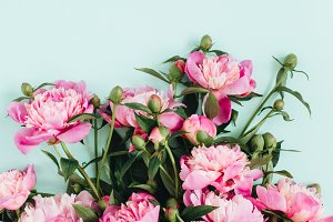 Peonies on blue background