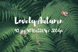 Lovely autumn bundle