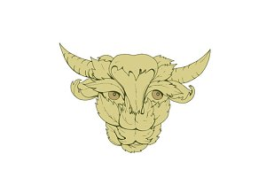 Green Bull Cow Drawing
