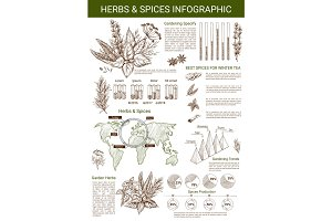 Vector infographics for spice and herbs