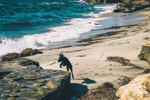 Puppy Jump