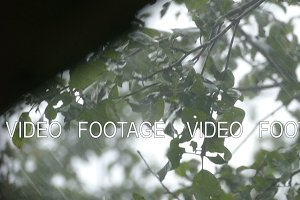 Heavy rain and a tree with leaves