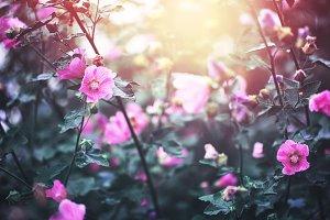 many vintage pink flowers