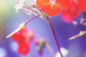 red garden flower vintage
