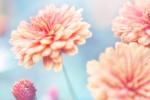 garden beautiful flowers vintage