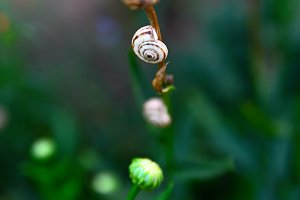 snail on flower stalk