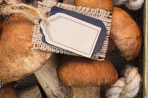 Raw white mushrooms, pine cones and tag for simple text