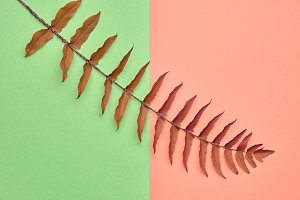 Autumn Art Gallary. Fall Fashion.Minimal.Fern Leaf