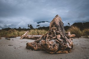 Driftwood on Beach in New Zealand